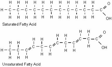 Structure_Of_Fats