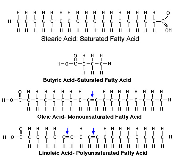 Structure Of Fats MUFA PUFA